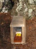 rat-trap